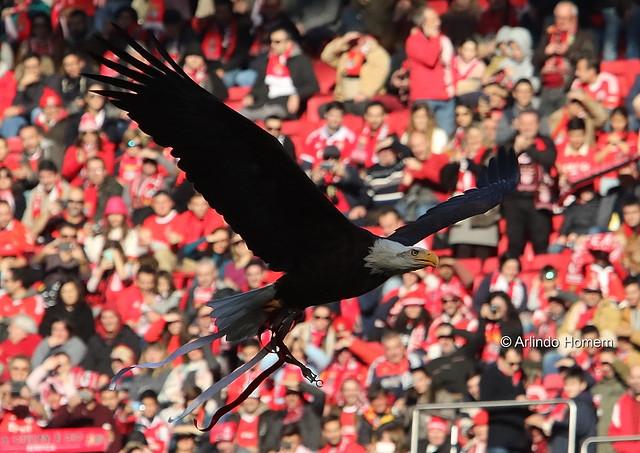 Benfica 4 - 0 Tondela