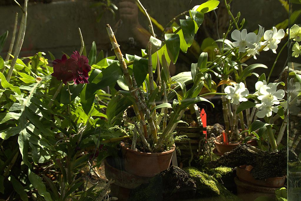 orquídeas y otras plantas