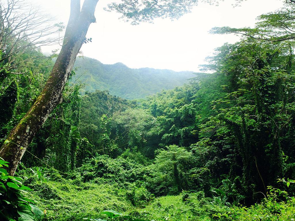 Oahu-(142)