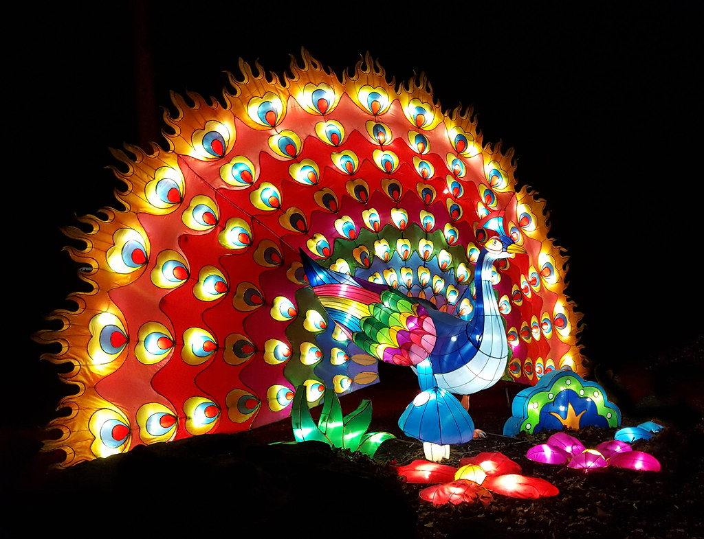 peacock sculpture at the ohio chinese lantern festival by randy durrum