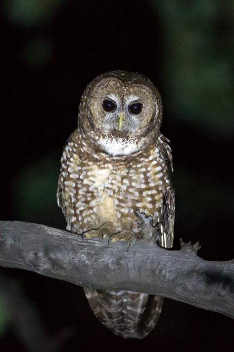 051416_owl20