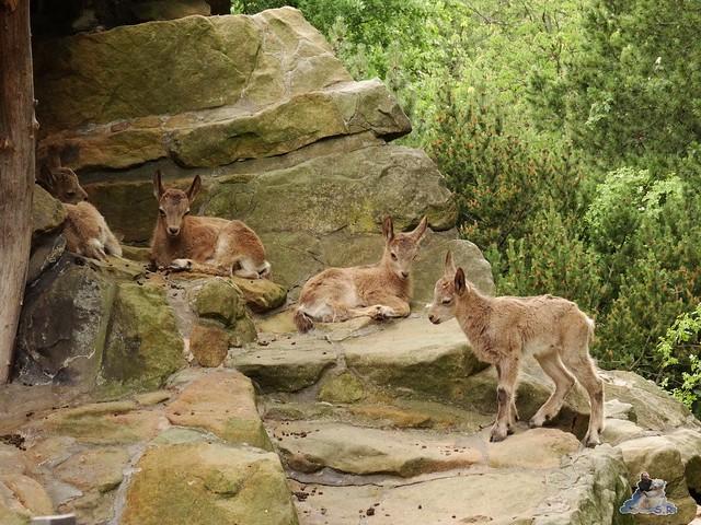 Zoo Berlin 09.06.2015  20