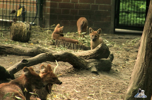 Tierpark Berlin 13.06.2015   106