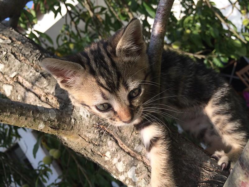 Os nossos animais de estimaçao!!! - Página 8 19056343211_8c6f7e57d5_c