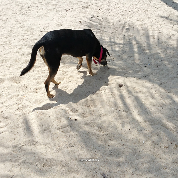 sand sniffing dog under shadows