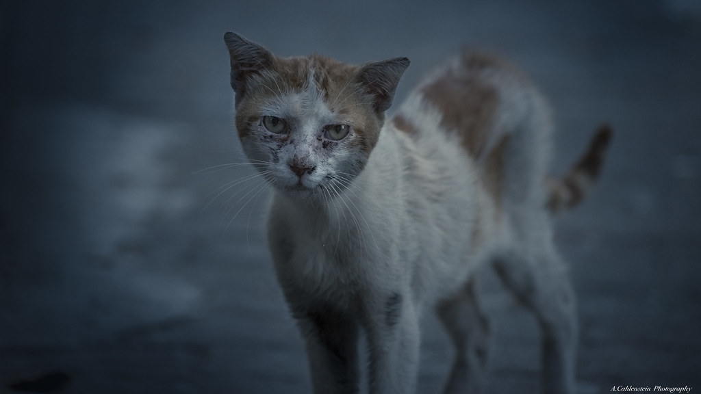 How To Help Stray Cats And Dogs