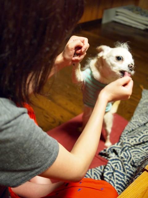 2015.6.17 犬