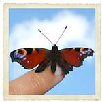 mariposa con marco