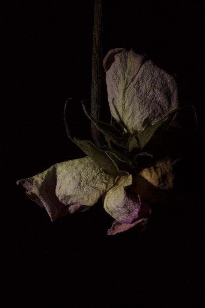 Flowers x Raver Ria 3