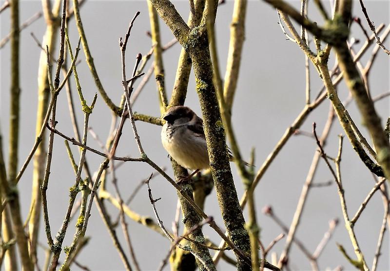 Sparrows 01.02 (2)