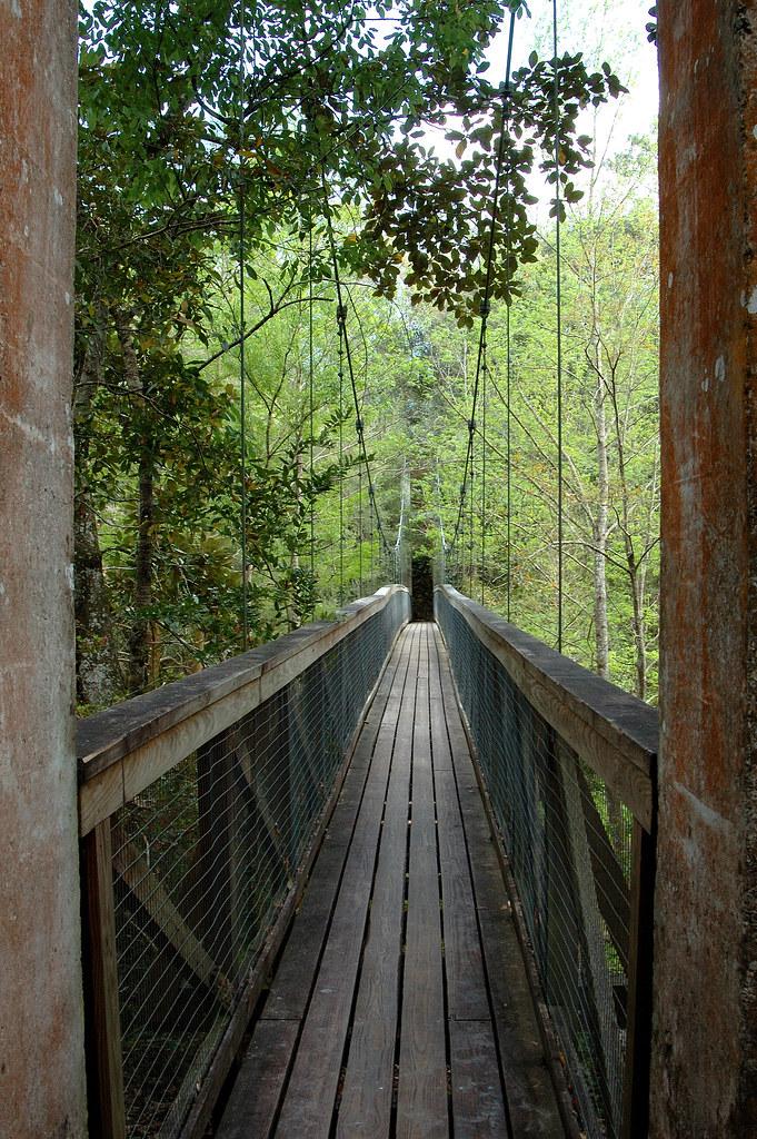 Suspension Bridge Ravine Garden State Park, Palatka, Flori…   Flickr