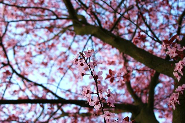 Blossom Natural Health