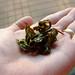 Oolong Tea 009