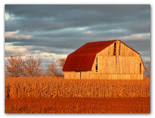 Barn and Corn | by Renald Bourque