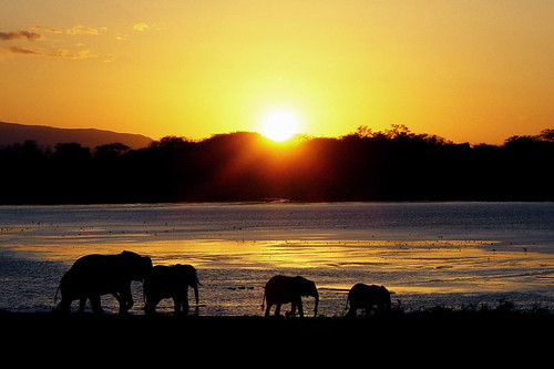 sunset with elephants / atardecer con elefantes | by adritzz