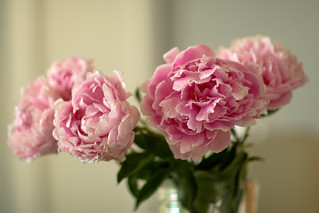 Rainy Day Peonies | by Pear Biter