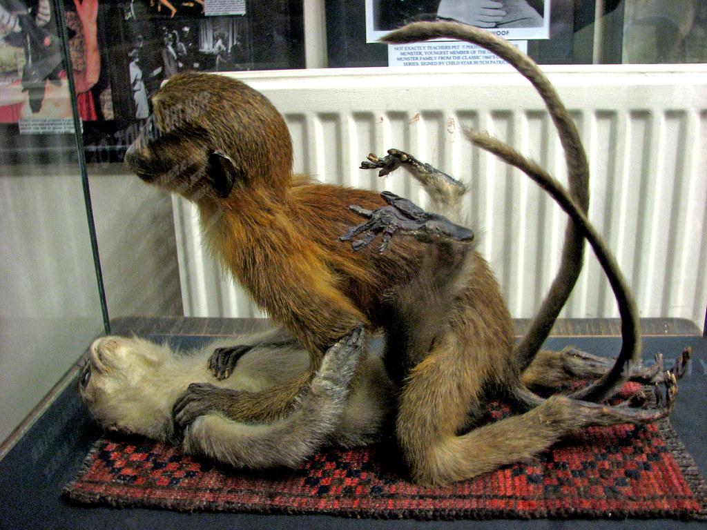 Секс с бабуином 7 фотография