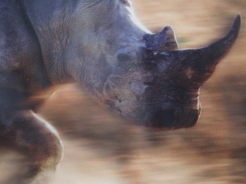 A rhino charging through Brum... | by Ned Trifle