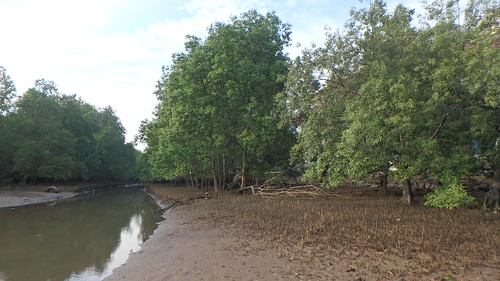 Mangroves at Berlayar Creek