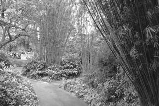 SF Botanical Garden - Bamboo