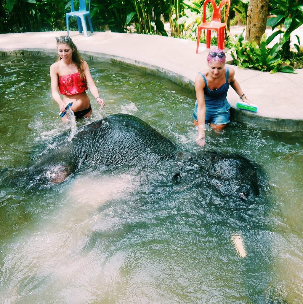 Elephant Bathing Koh Samui / Kirsty Wears Blog