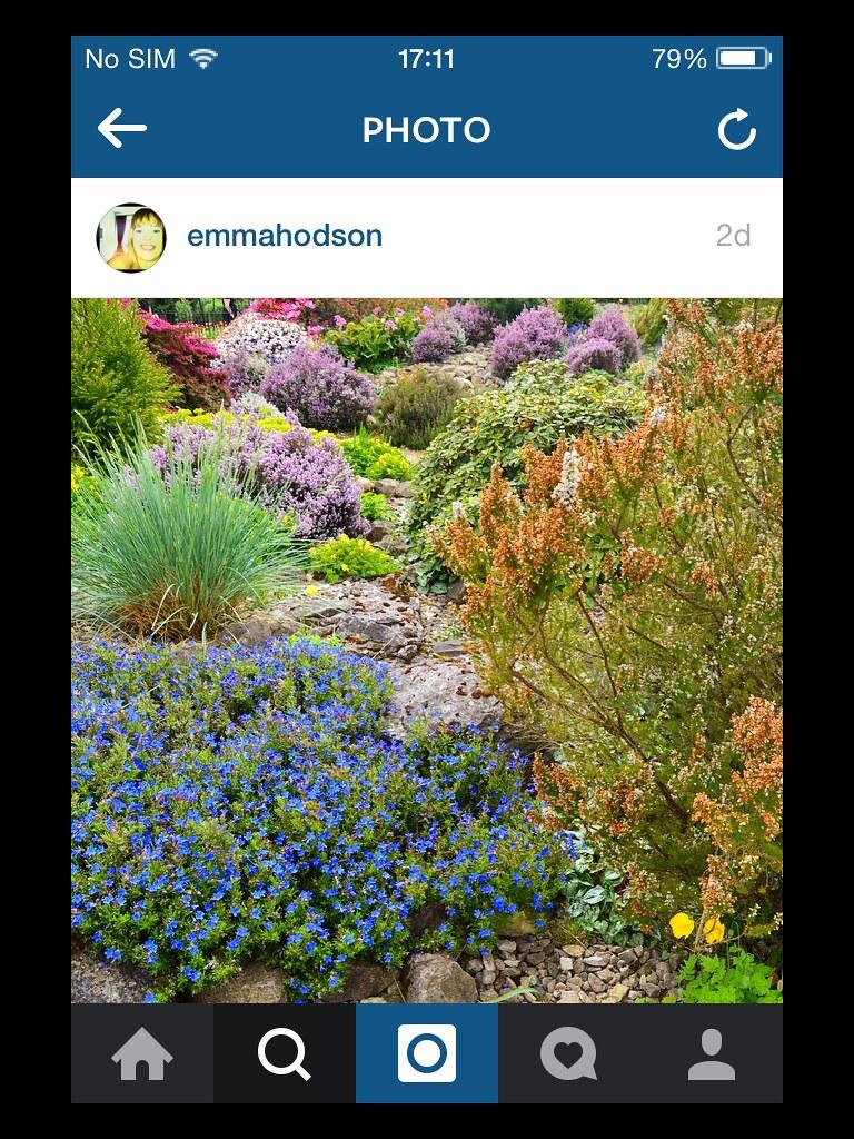 Альпийская горка. Люблю разнообразие форм и цветов!