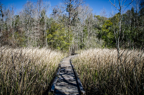 Old Santee Canal Park-15