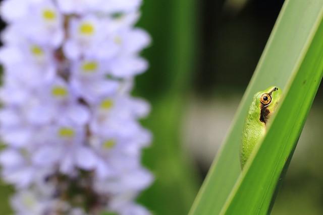 Mr.frog's botanical noon かえる君のボタニカル・ヌーン