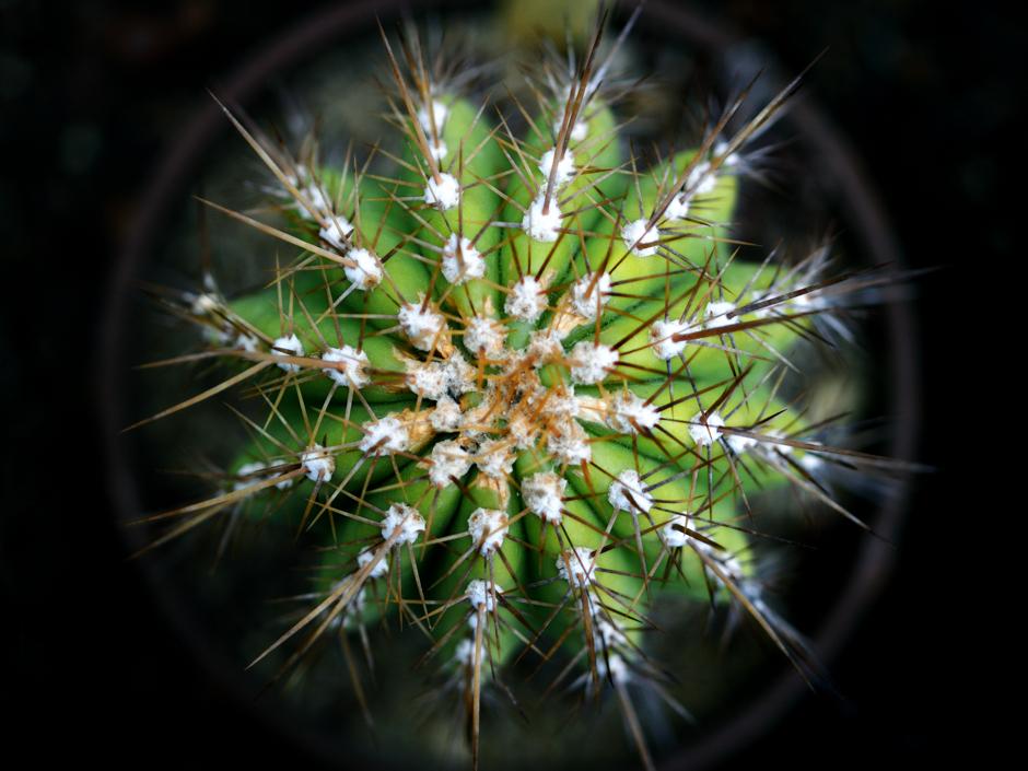Une serre de plantes arides-détail