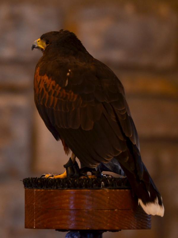 OWL - Harris