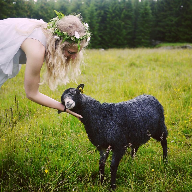 madde & fåret