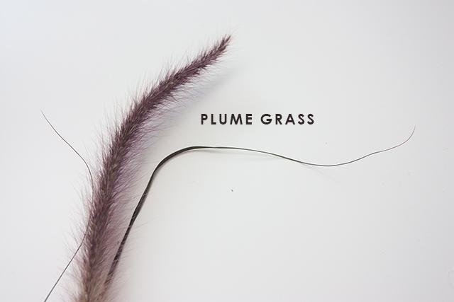 plume-grass-1