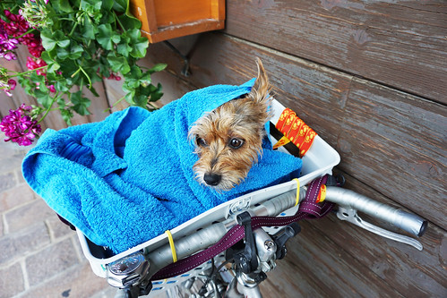 Luna in the bike basket