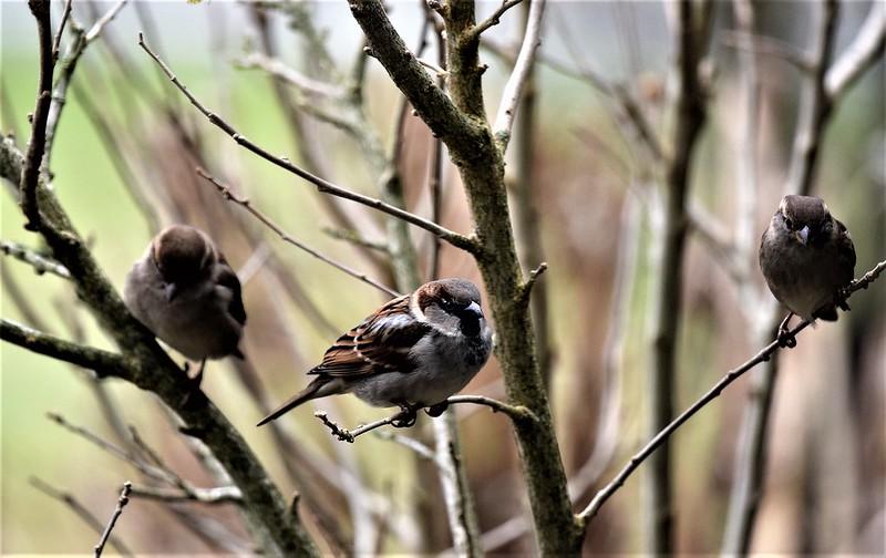 Sparrows 31.12 (11)