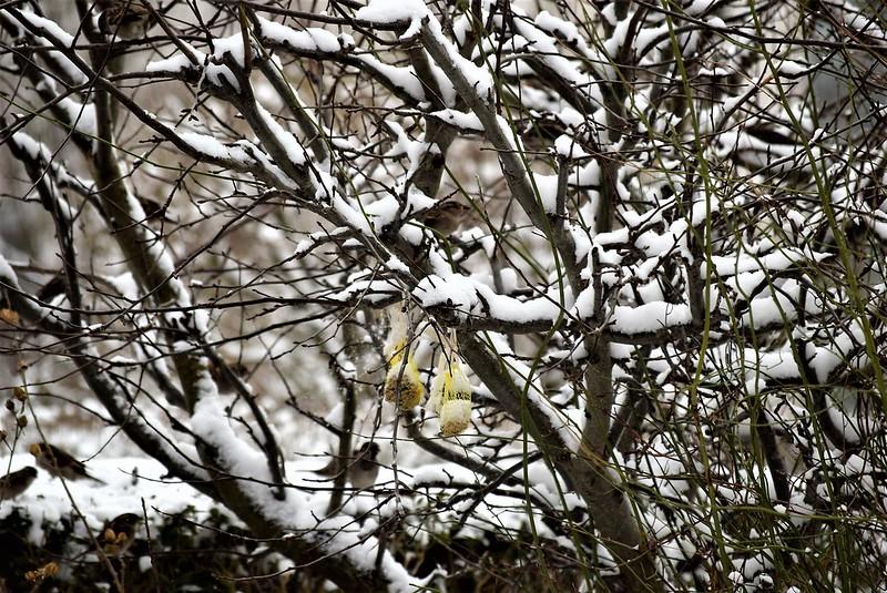 Sparrows 13.01 (20)