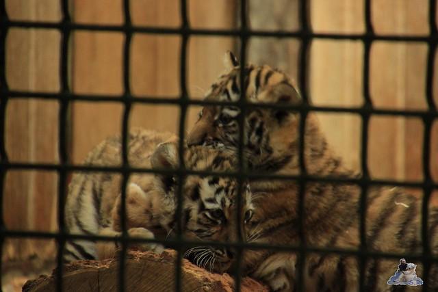 Tierpark Berlin 24.06.2014  18