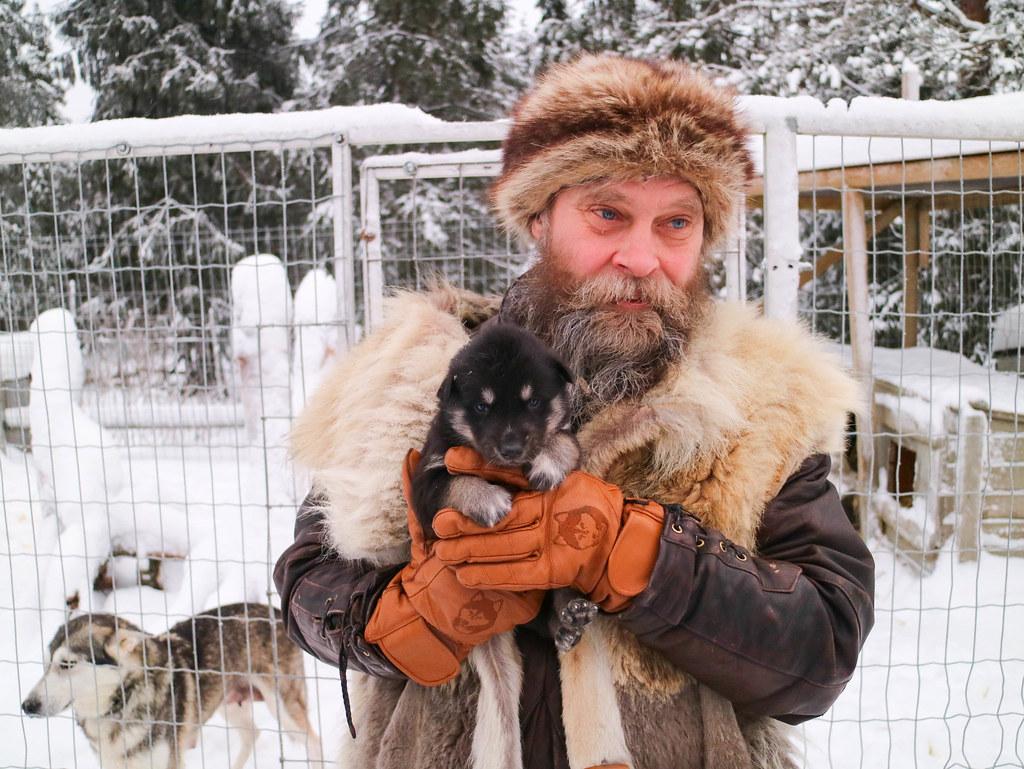 Huskies en Finlandia