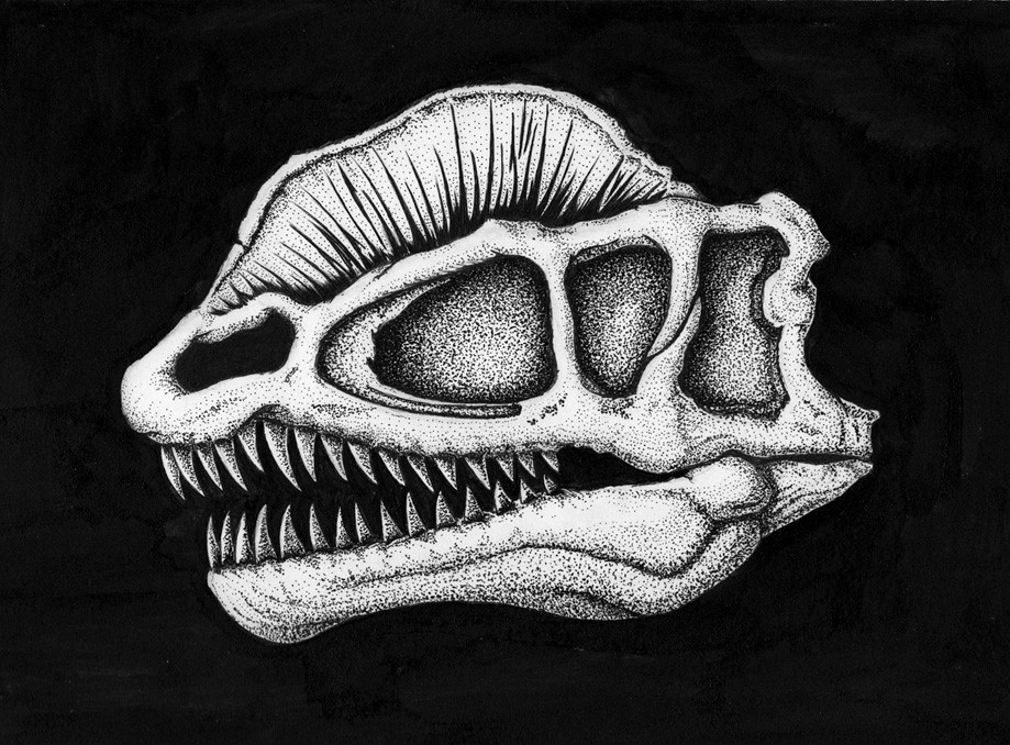Dilophosaurus skull pen drawing | 2016, dinosaur anatomy ink… | Flickr
