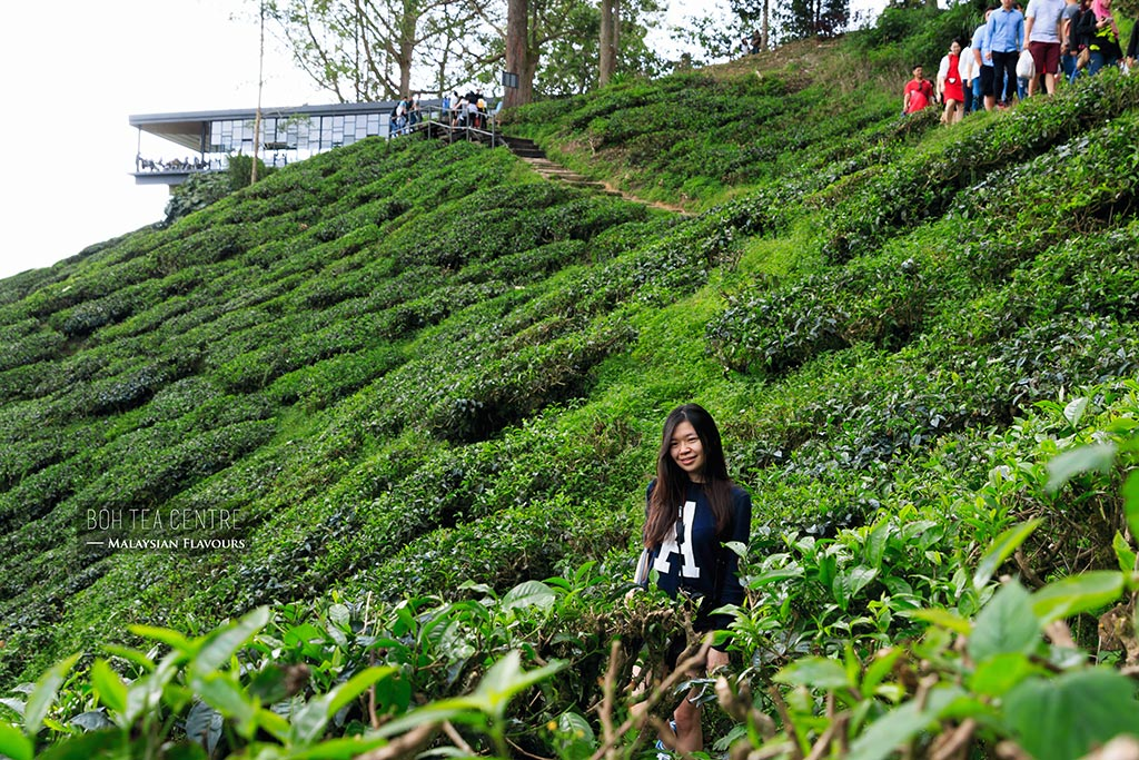 BOH Tea Centre Sungai Palas Cameron Highlands