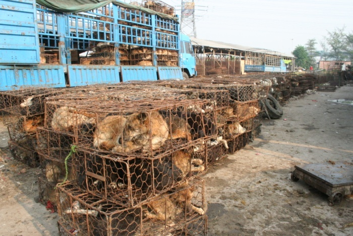 A rusty transport vehicle covered in dog fur and blood loaded with a mass of cages