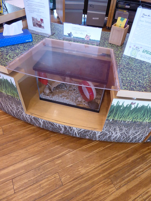 Gerbils in the service desk children's room, Main Library, Cambridge Public Library, MA
