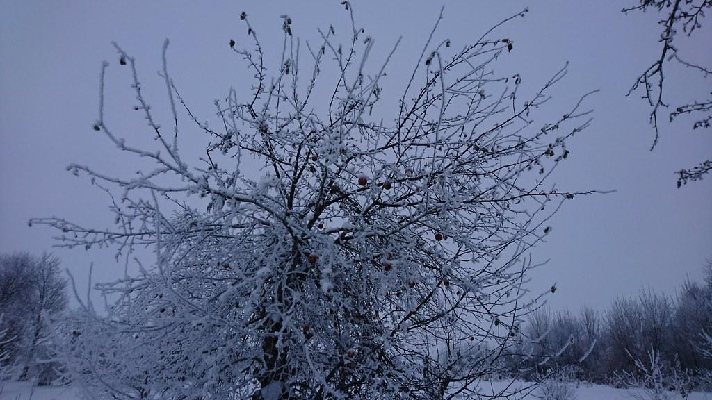 Деревенская природа зимой