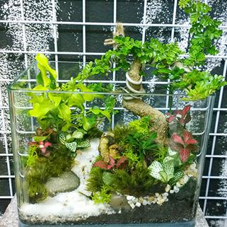 tieucanh24h   tieu canh   tieu canh khong khi   terrarium   art plant   cay khong khi