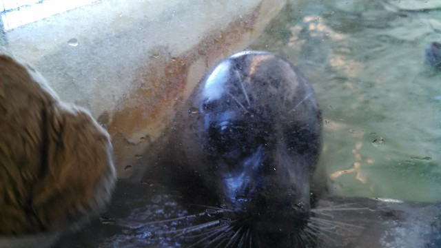 Kuma Bear at the Aquarium