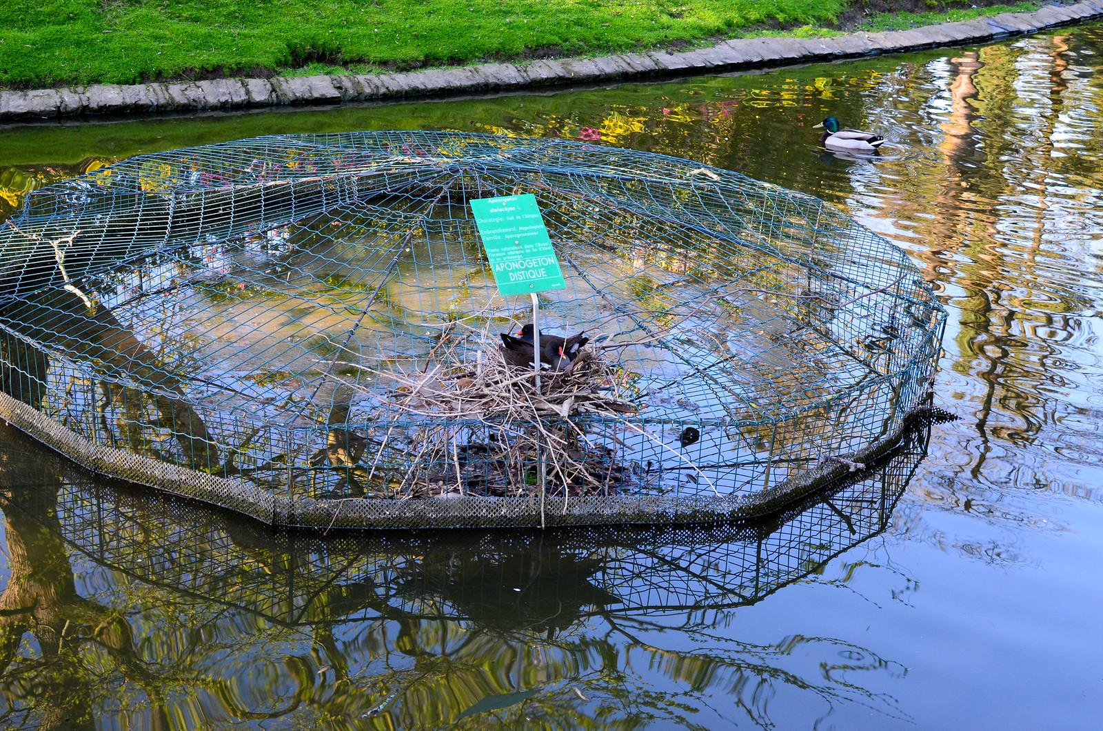 Oiseaux Jardin des plantes Nantes