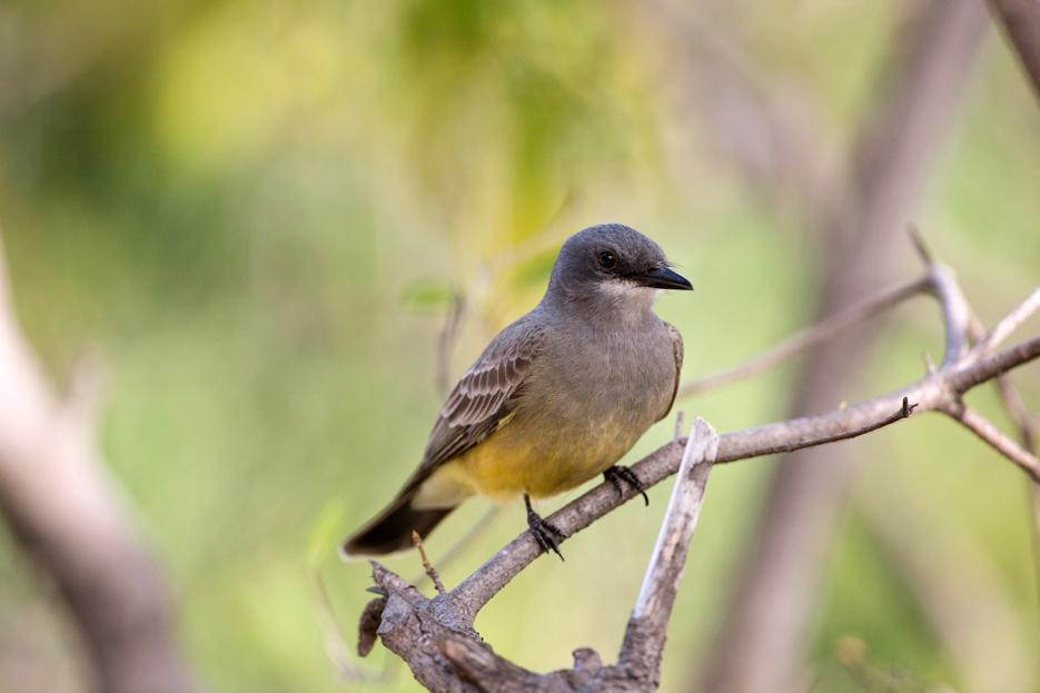 041115_birds02