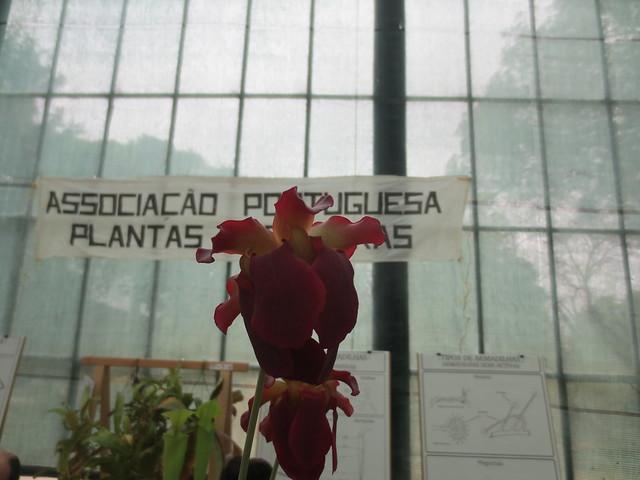 Exposição Jardim Botânico da Ajuda - Abril 2015 18740717112_19f34dd8ea_z