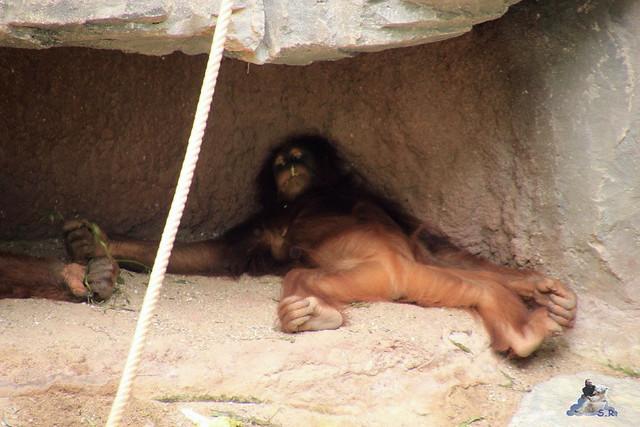 Tierpark Hagenbeck 04.07.2015  116