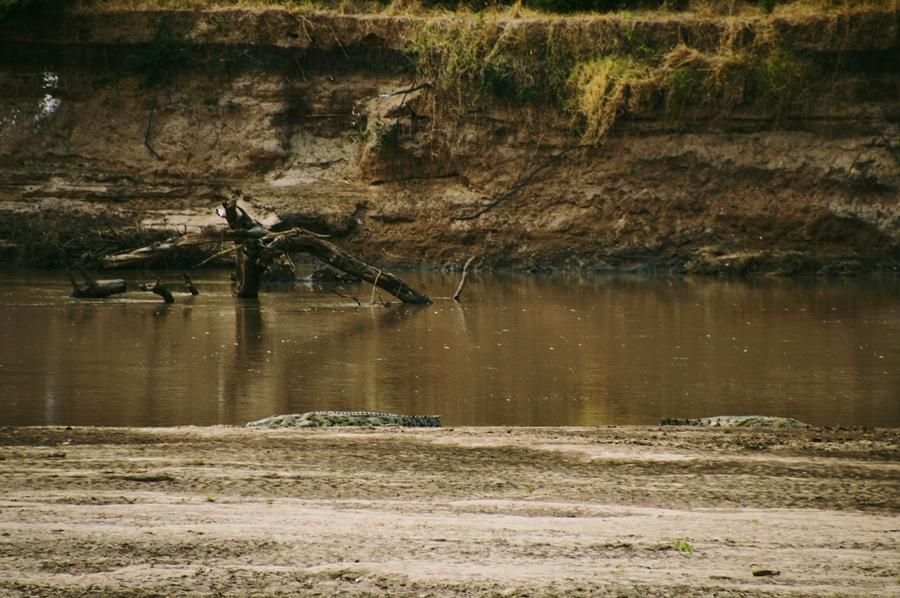 croc20