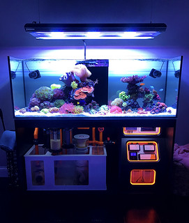 Fts 1 toby broadfield flickr for Snap on fish tank